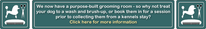 Dog Grooming at Blossoms